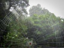 Rosée légère sur la toile d'araignée Photos libres de droits