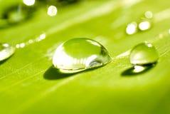 Rosée sur des feuilles de vert après pluie Images libres de droits