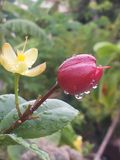 Rosée sur des fleurs et des plantes Photo stock