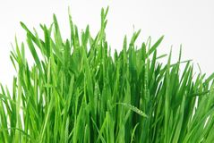 Rosée sur l'herbe Photo libre de droits