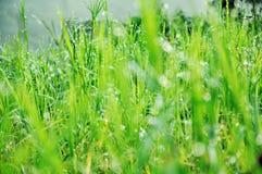 Rosée sur l'herbe Photographie stock