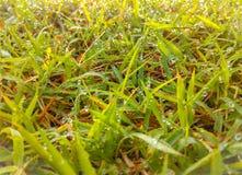 Rosée sur l'herbe Photos libres de droits