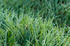 Rosée sur l'herbe Photos stock