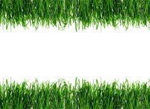 Rosée sur l'herbe de source Images libres de droits
