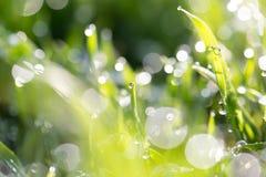 Rosée sur l'herbe en nature image stock