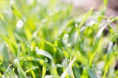 Rosée sur l'herbe en nature images stock