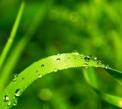 Rosée sur l'herbe verte image stock