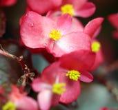 Rosée sur la fleur images libres de droits