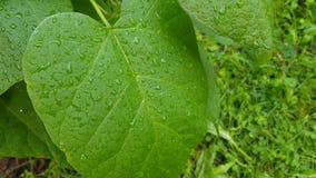 Rosée sur les feuilles en gros plan clips vidéos