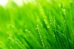 Rosée sur une herbe photo stock