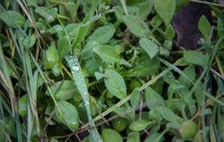 Rosée sur une lame d'herbe Photos libres de droits