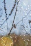 Rosée sur une toile d'araignée Photo stock