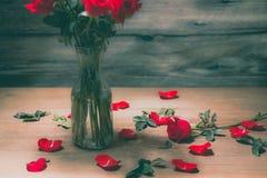 Ros av valentindagen Royaltyfri Fotografi