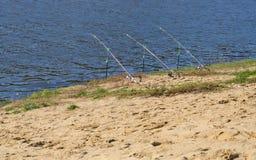 Ros na praia do rio Foto de Stock Royalty Free