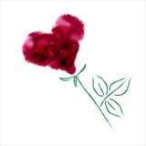 Ros-som hjärta Royaltyfri Foto
