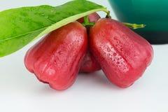 Rosa äpple eller Chomphu Arkivfoto