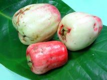 Rosa äpplefrukt för malajiska Arkivfoton