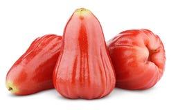 Rosa äpplen eller chomphu som isoleras på vit Arkivfoto