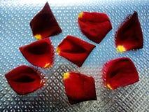 Rosa è aumentato petali con fondo strutturato d'argento immagini stock libere da diritti