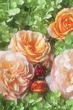 Rosa. Imagem de Stock