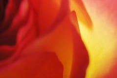 A Rosa Imagem de Stock Royalty Free