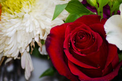 Free Rosa Royalty Free Stock Images - 41300739