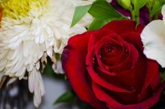 rosa Obrazy Royalty Free