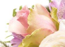 Rosa. Fotos de Stock