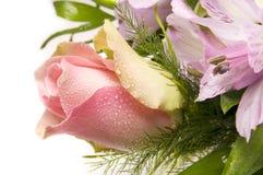Rosa. fotografia de stock
