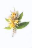 Rosa abloom Magnolienblume Lizenzfreies Stockfoto