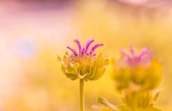 Rosa abstracto asombroso de la flor Una flor hermosa con colores en colores pastel delicados Foco suave selectivo Fotos de archivo libres de regalías