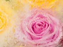 Rosa Abstraktion mit stieg Lizenzfreie Stockbilder