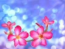 Rosa Adeniumblumen lizenzfreie abbildung