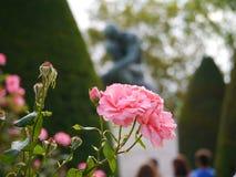 Rosa al Rodin Fotografia Stock