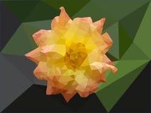 A rosa alaranjada Imagem de Stock