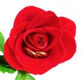 Rosa & alianças de casamento Fotografia de Stock Royalty Free