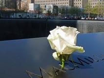 Rosa allo stagno di riflessione commemorativo dell'11 settembre Fotografia Stock