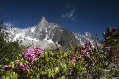 Rosa alpina Fotografia Stock Libera da Diritti
