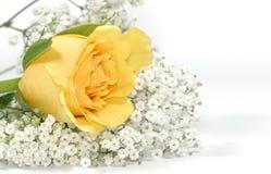 Rosa amarela imagens de stock royalty free