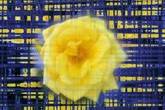 Rosa amarela grande com efeito do pulso aleatório ilustração stock