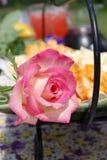 Rosa & formaggio Fotografia Stock Libera da Diritti