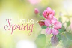 Rosa Apfelblumen blühen im Frühjahr Hallo Frühlingskarte lizenzfreies stockfoto