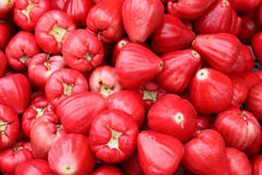 Rosa Apple Immagini Stock Libere da Diritti