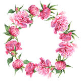 Rosa Aquarellpfingstrosenweinlese-Grußkarte Lizenzfreies Stockfoto
