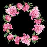 Rosa Aquarellpfingstrosenweinlese-Grußkarte Stockbilder