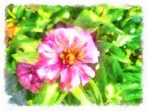 Rosa arbustos no jardim espanhol velho Pétalas de Rosa cor-de-rosa 01 Foto de Stock