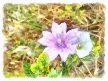Rosa arbustos no jardim espanhol velho Pétalas de Rosa cor-de-rosa 01 Imagem de Stock