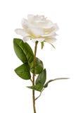 Rosa artificial do branco isolada Foto de Stock Royalty Free
