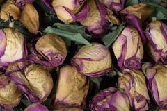 Rosa asciutta Fotografia Stock