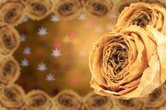 rosa asciutta doppia di bianco con la struttura sul bokeh delle foglie di acero della sfuocatura Immagini Stock